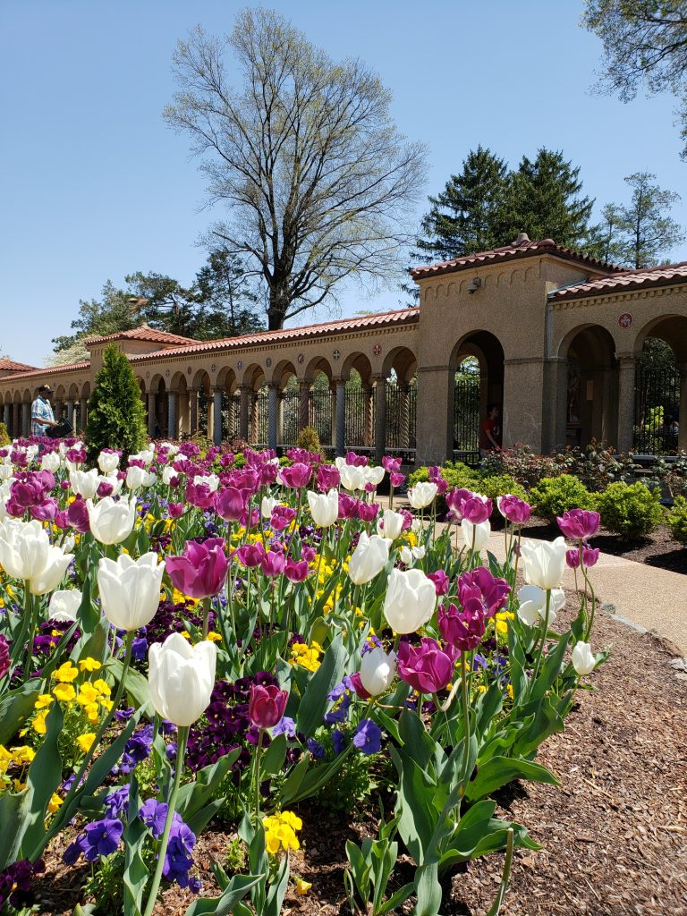 Tulips in the gardens at the Franciscan Monastery