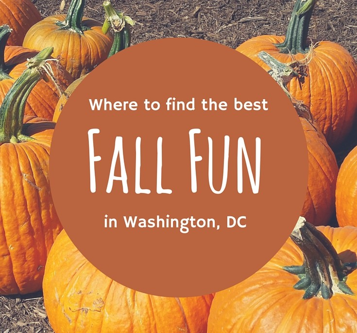 Fall Fun Washington DC