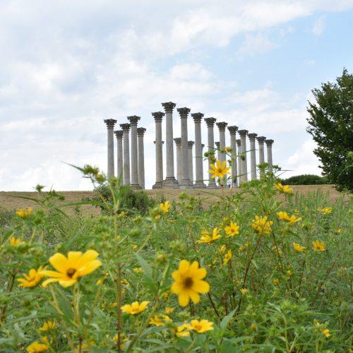 National Arboretum Captiol Columns